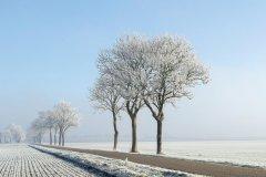 Frozen-fog-Aangevroren-mist-164631972