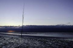 Staak-bij-zonsopkomst-Stake-at-sunrise-153656998
